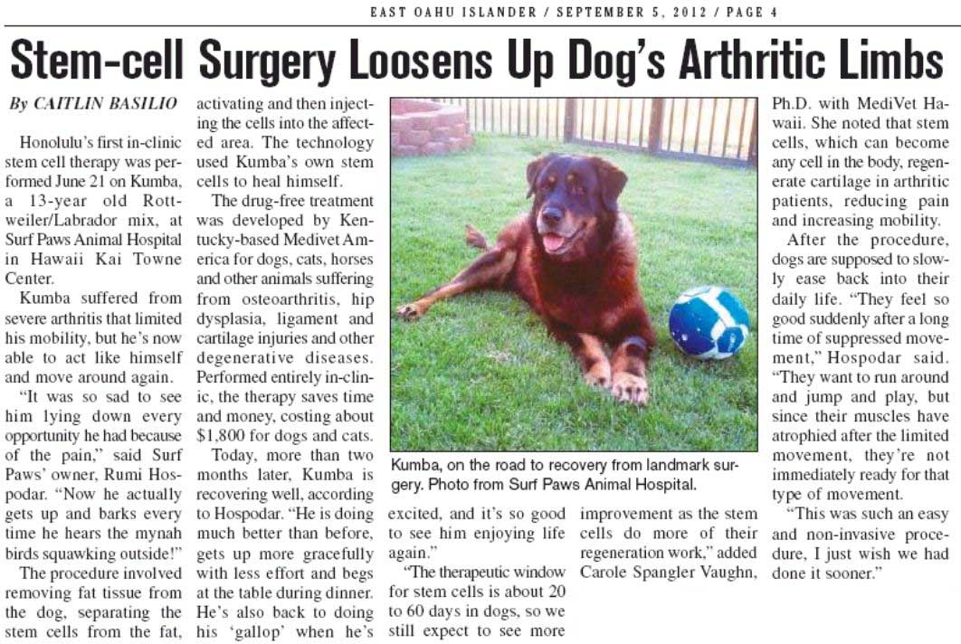 Stem-Cell Surgery Loosens Up Dog's Arthritic Limbs